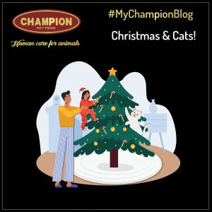 Christmas Decorations & Cats: How to protect both of them